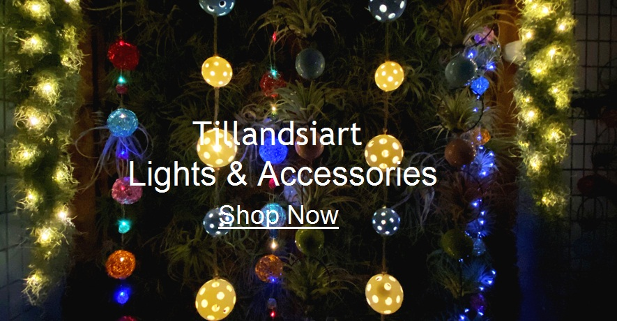 Tillandsia Air Plant Lights & Accessories