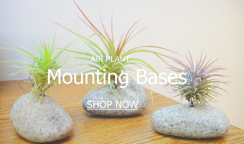 Tillandsia Air Plant Mounting Bases
