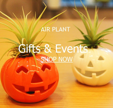 Tillandsia Air Plant Gifts & Events