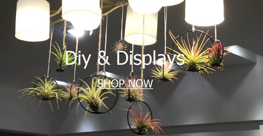 Tillandsia Air Plant DIY Kits & Displays