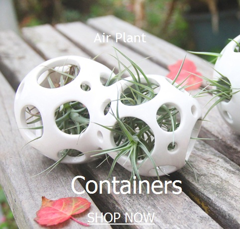 Tillandsia Air Plant Containers