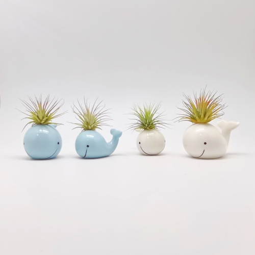2/S Whales Air Plant Mounting Bases  W/Two Colors Assorted