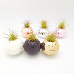 Air Plant Floating Ball Planter With 6 Colors Assorted