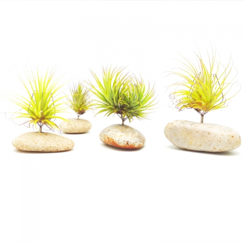 4Pcs River Stone Air Plant Holder Set