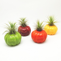 Air Plant Mounting Base w/Gourd Design 4 Colors Assorted Set
