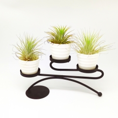 3Pcs Air Plant Pots With Metal Display Rack