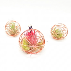 6 Pack Tillandsia Air Plant Wire Cage Set - 8 CM and Copper Plated
